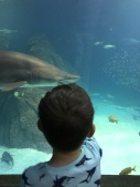 Sharks at the Aquarium