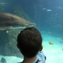 Sharks at the Aquarium