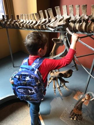 AMNH Dinosaur